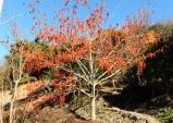 에코 푸른숲 전남 1월 나무에 이나무