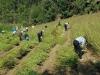 음성군 공직자, 가을철 농촌일손돕기 나서